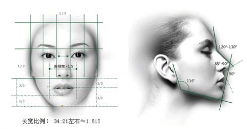 鼻部美学标准示意图1