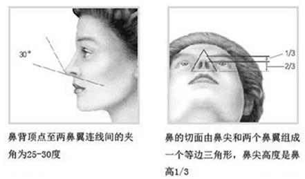 鼻部美学标准示意图2