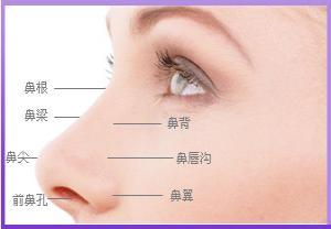 外鼻结构示意图